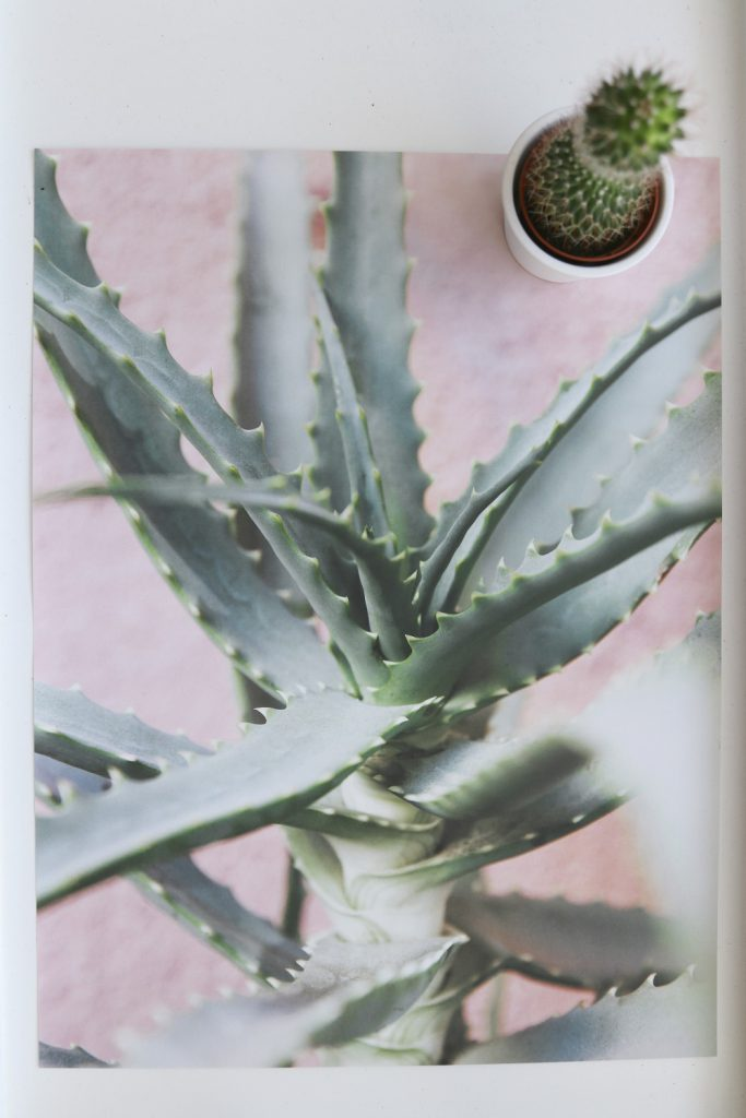 Desenio Poster Pink Wall Cactus Palm Home Decor Interior