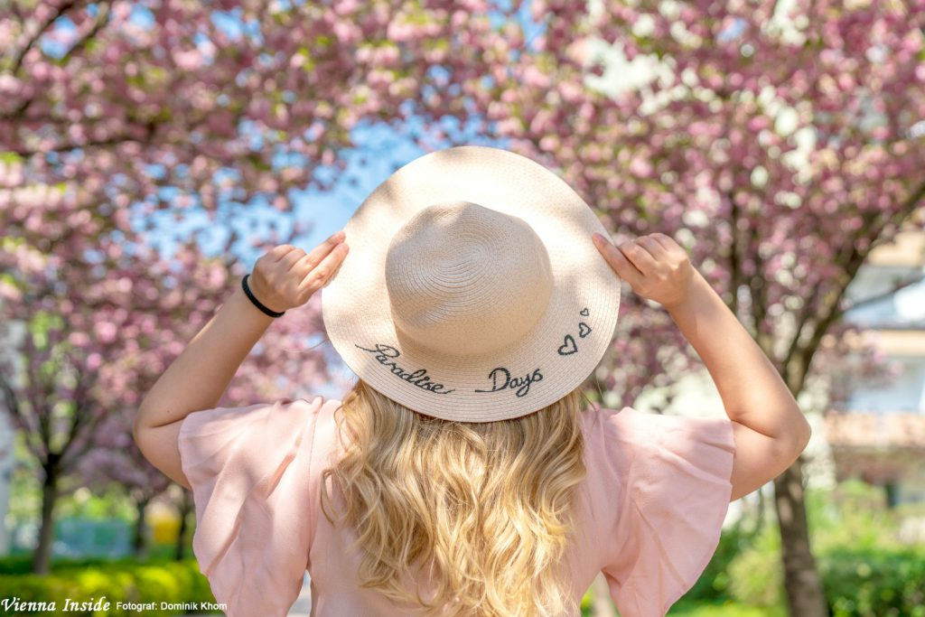 Die besten Kirschblüten Foto Locations in Wien