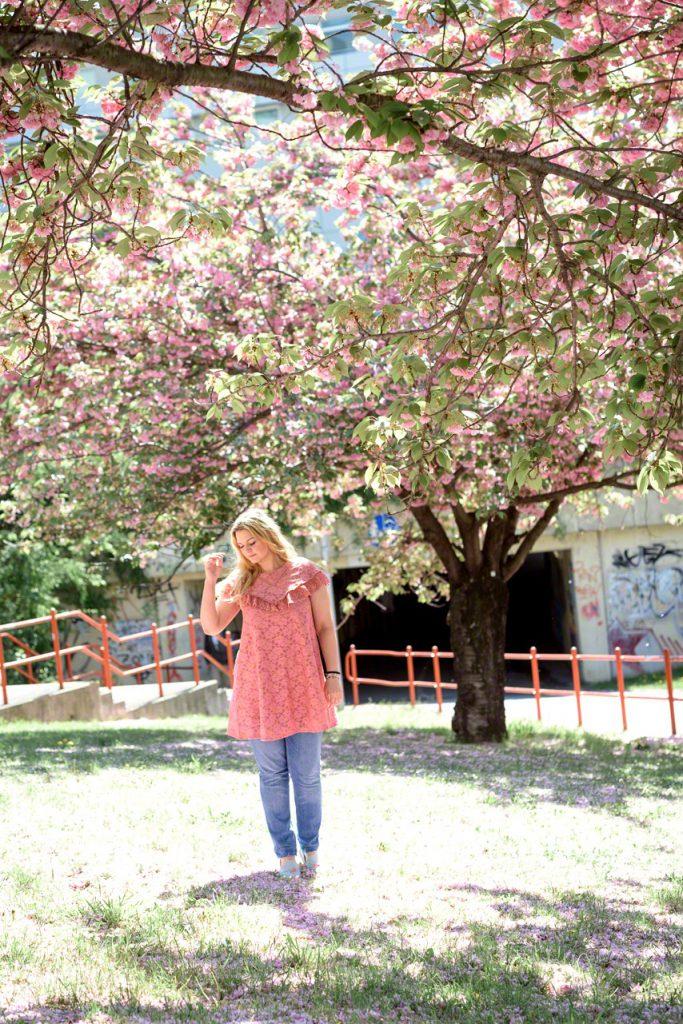 beste Kirschbluten Foto Location Wien